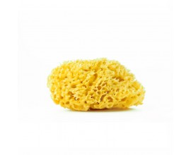 Natural sponge diameter 12 cm